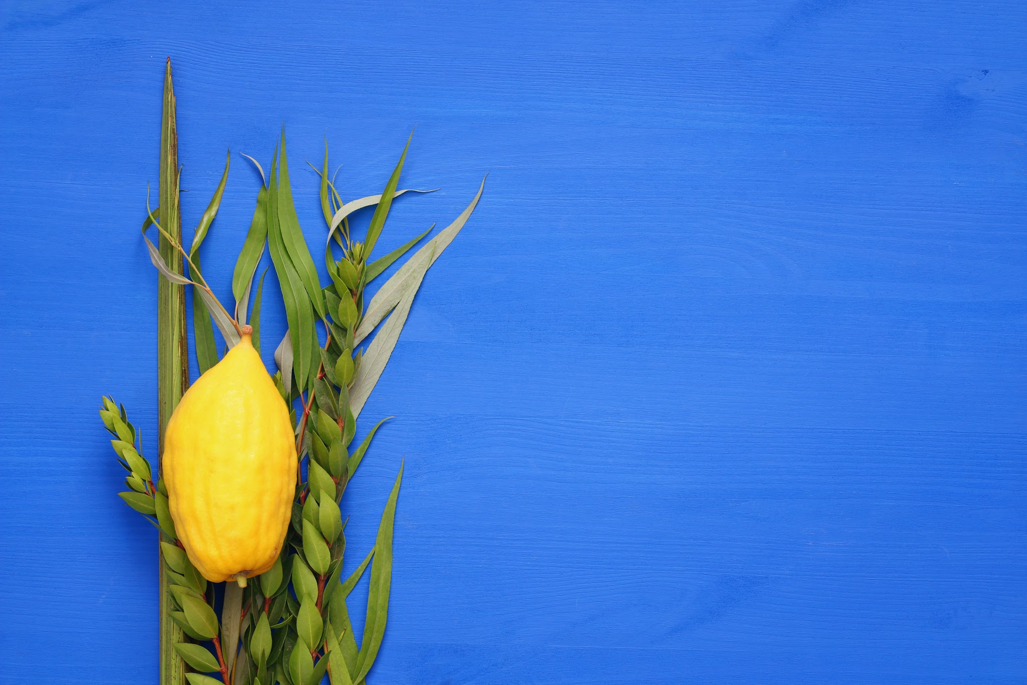 Join us in the sukkah during this joyous harvest holiday.